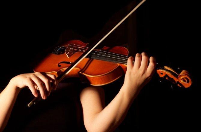 violin_musico